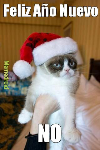 grumpy cat año nuevo meme